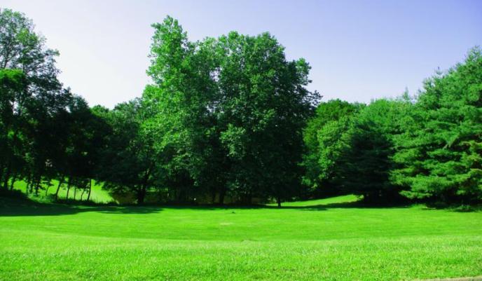 grassandtrees